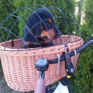 Košík na retro bicykel pre psa/mačku ružový